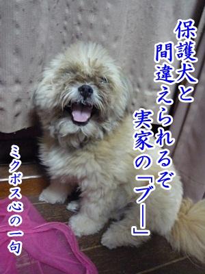 川柳P1220249