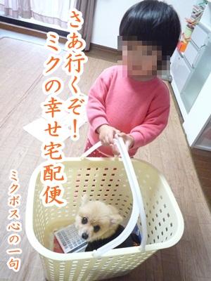 川柳P1150718
