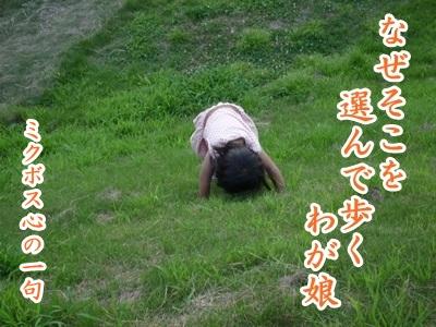 川柳P1220949