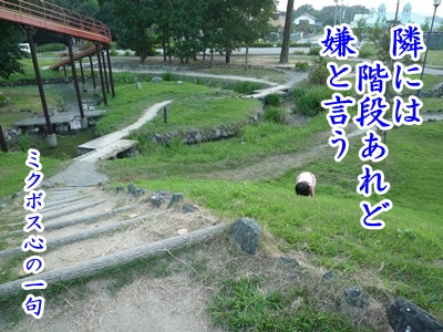 川柳P1220950