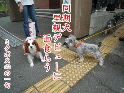 川柳P1190390