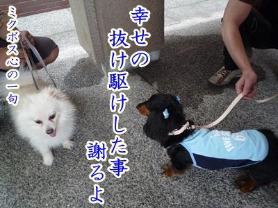 川柳P1190366
