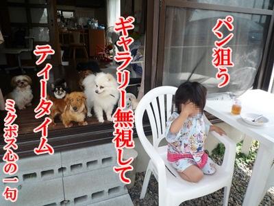 川柳P1200609