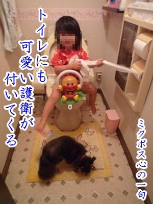 川柳P1200790