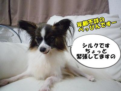 シルク姉さんP1240083
