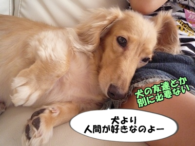 ぶーりん2021