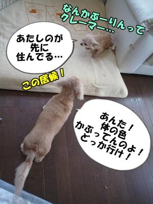 ぶーりん2026