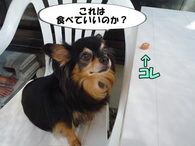 ちわ王P1230419