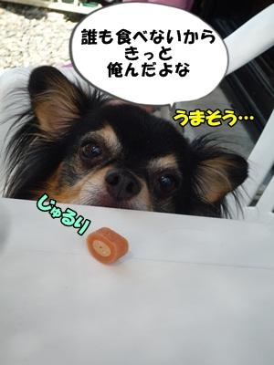 ちわ王P1230418