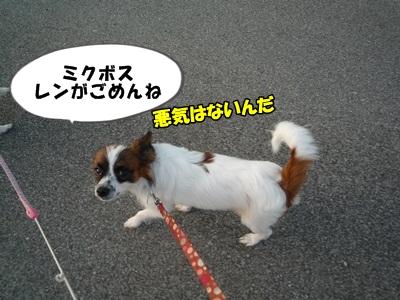 かいれん散歩P1240189