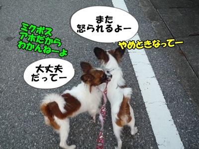かいれん散歩P1240188