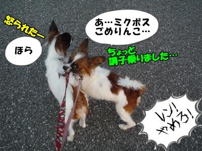 かいれん散歩P1240182