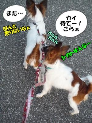かいれん散歩P1240186