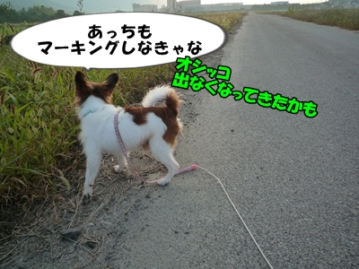 かいれん散歩P1240194