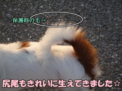 かいれん散歩P1240198