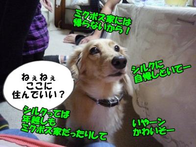 ぶーりんP1240485