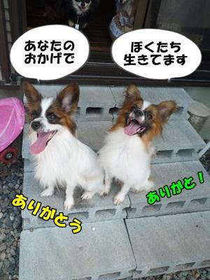 かいれんP1230438