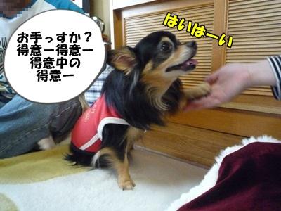 おうじろうP1240832