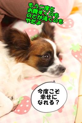 かいわれんこんIMG_3745