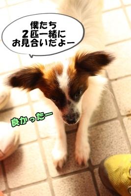かいわれんこんIMG_3672
