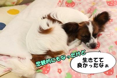 かいわれんこんIMG_3737