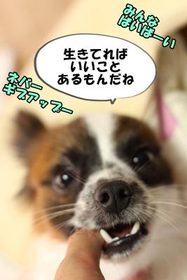 かいわれんこんIMG_3729