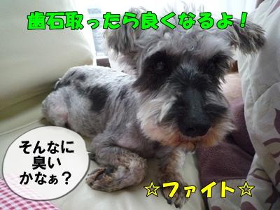 bibiP1030643.jpg