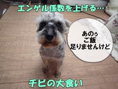 bibiP1030663.jpg