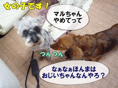 bibiP1030669.jpg
