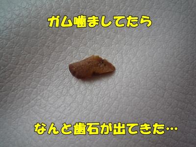 bibiP1030694.jpg