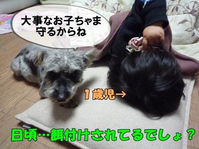 bibiP1030699.jpg