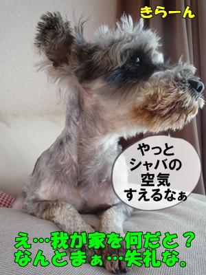 bibiP1030787.jpg