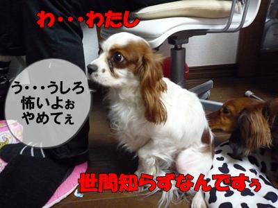 himeP1020839.jpg