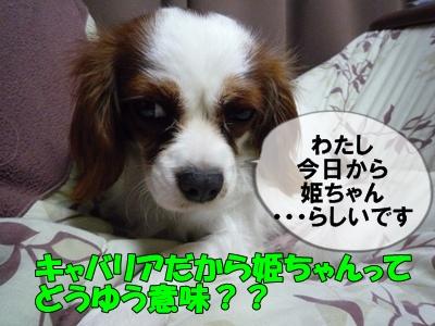himeP1020889.jpg