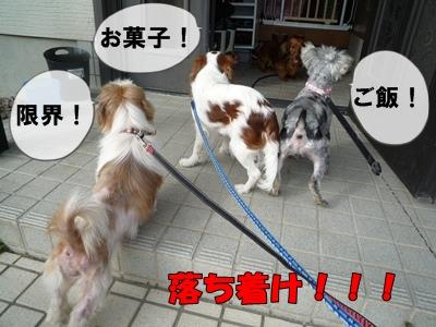 himebibikayamaruP1030613.jpg