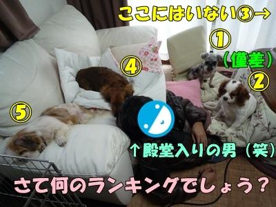 himebibikayamaruP1030618.jpg