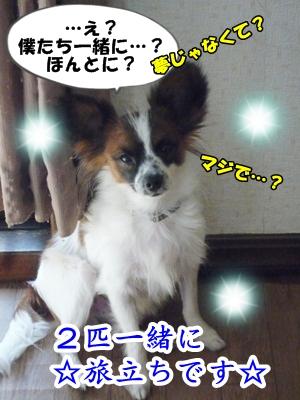 kaiP1240577.jpg