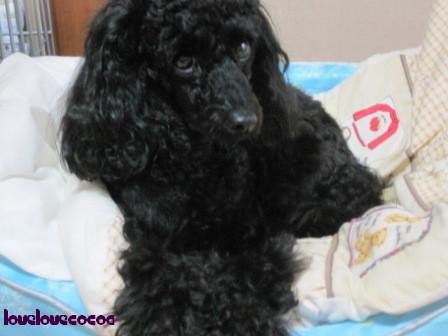 IMG_0846-cocoa.jpg