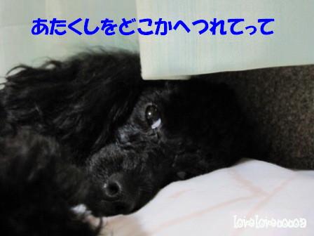 IMG_3398-cocoa.jpg