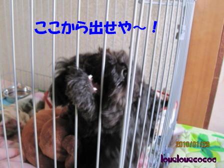 IMG_3828-cocoa.jpg