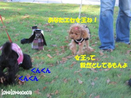 IMG_4546-cocoa_20101026235918.jpg