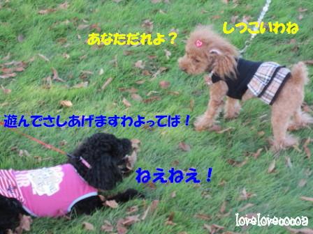 IMG_4560-cocoa_20101026235919.jpg