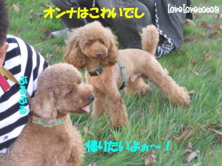 IMG_4570-cocoa_20101027000214.jpg