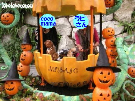 IMG_4793-cocoa.jpg