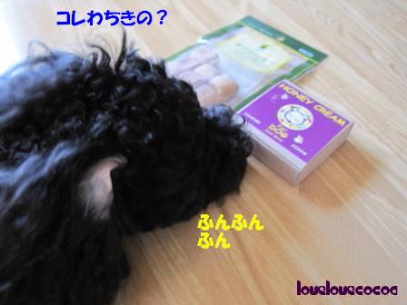 IMG_7643-cocoa.jpg