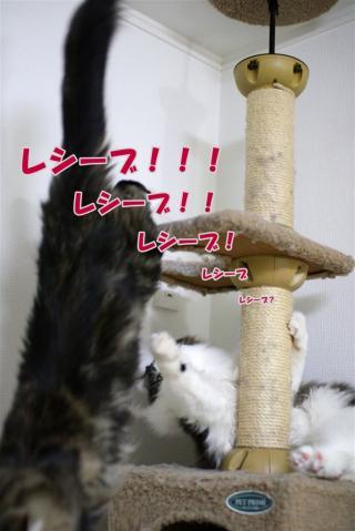 ジャガー&来夢2