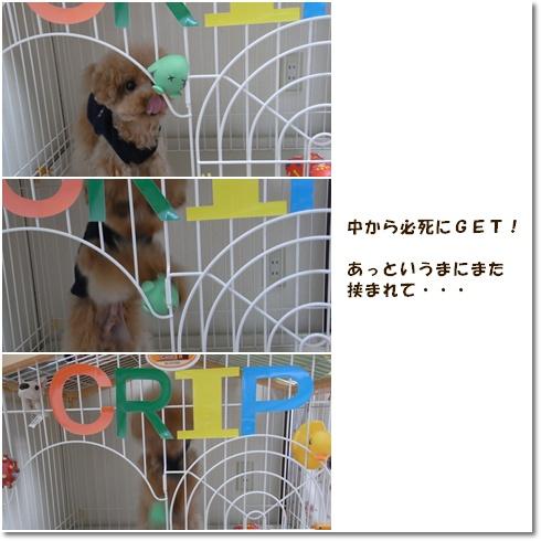 cats_20100509120933.jpg