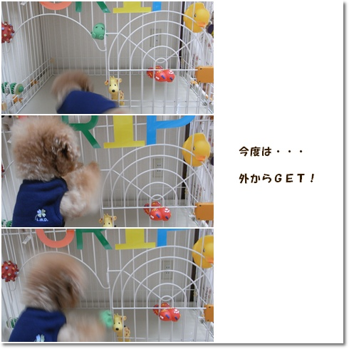 cats_20100509121109.jpg