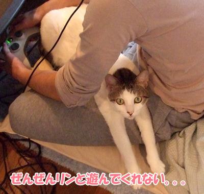 091204_しゅわっち1