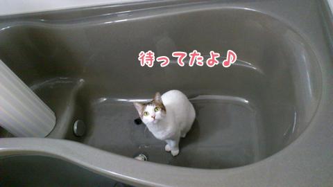 120127_リンお風呂好き01